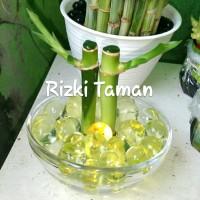 Lucky bamboo Batang mangkok kaca hidrogel bambu hoki