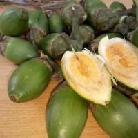 buah jambe muda 500grm