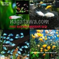 Hiasan Aquarium Paket Satu Ikan Hias Golden Molly, Marbel, Corydoras A