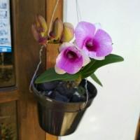 Tanaman hias anggrek dendrobium bunga ungu polos BUNGA HIAS INDOOR