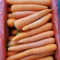 Wortel Berastagi Brastagi Lokal Super Fresh Carrot Per Dus