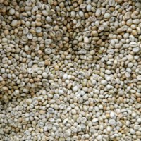 Green Beans Kopi Robusta Jawa (1 Kg) Grade 1