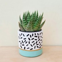 Pot Kaktus Mini Concrete Gigrin