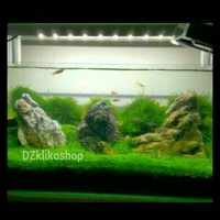 Jual Hot List Lampu Aquascape Aquarium Tank 45cm 50cm Best Seller Jakarta Pusat Rista Olshops Tokopedia