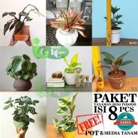 Paket PROMO MURAH tanaman hias peperomia & philodendron UNTUK INDOOR