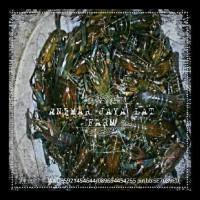 bibit / benih udang raksasa (lobster air tawar) EKSLUSIF
