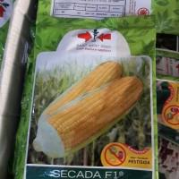 bibit jagung manis secada f1 kemasan besar