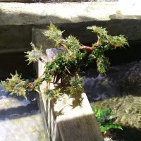 Paling Terlaku Tanaman Hias Bonsai Aquascape Baru