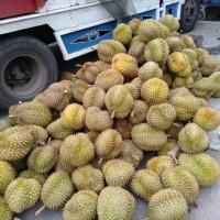 Reseller Duren Monthong Sulawesi - Paket Reseller Duren Monthong murah