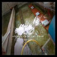 Bibit / Benih Udang Raksasa (Lobster Air Tawar) Promo Special