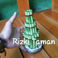 Lucky bamboo | bambu hoki | Ukuran Tinggi 20CM | souvenir tanaman