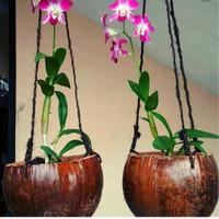 Jual Pot Bunga Anggrek Dari Batok Kelapa Pot Tanaman Hias Kab Wonosobo Kalintang Id Tokopedia
