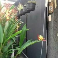 suntex blind - Jakarta - deden decor Tirai Outdoor Tahan Air/Suntex