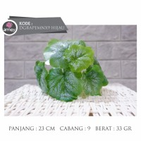 daun grape mn x9 hijau