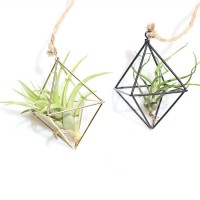 Harga angela freestanding hanging metal geometric tillandsia air plant   antitipu.com