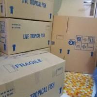 Kardus Buat Packing