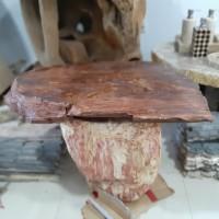 Coffee Table Fosil kayu natural