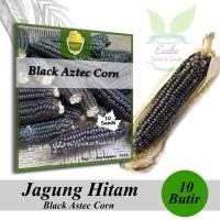 Benih Biji Jagung Hitam Black Aztec Corn - Harvest Seed