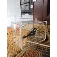 Kandang Burung Akrilik