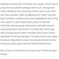 diabetes de ratu rayap untuk obat