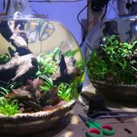 Jual Aquascape Aquarium Bulat Kota Surabaya Doctoraquascape Tokopedia