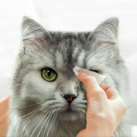 Tisu Pembersih Mata Anjing Kucing