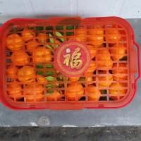 Jeruk Shantang Santang Daun Kecil Fresh Manis Giftpack