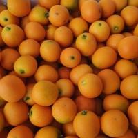 Jeruk Kimkit Emas Kumquat Fresh Per Box