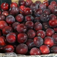 Plum Hitam Import