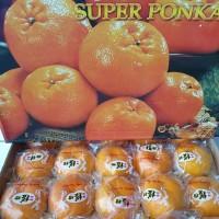 Buah Jeruk Imlek Ponkan Ponkam Mandarin Fresh Gift Box Parcel
