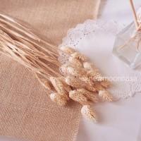 jual natural dried flower plants dekorasi bunga kering