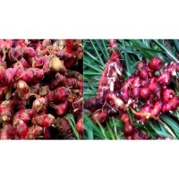 Ready @ JAHE MERAH SEGAR ALAMI FRESH RED GINGER 1KG