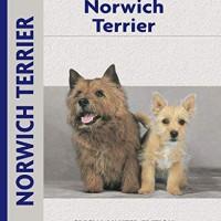 Jual Norwich Terrier Jakarta Selatan Bookxuply Tokopedia