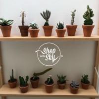 Kaktus Sukulen Dan Pot / Cactus & Succulent - Sudah Termasuk Pot
