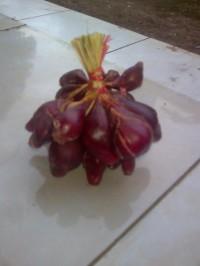 bawang dayak segar