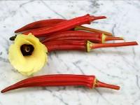Bibit / Benih / Seeds Sayur Okra Merah Baik Untuk Kesehatan