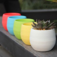 Mini Pot Bunga Hias Kaktus Tanaman - 5pcs