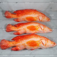Boneka (Plushies) unik Ikan Kerapu Merah bagus buat pajangan