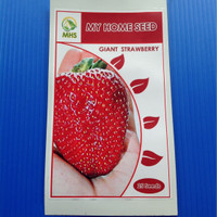 Benih Giant Red Strawberry Isi 25 Seeds
