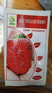benih / bibit giant strawberry (MHS)