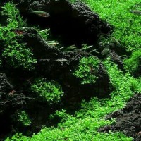 Batu lava rock / lava rough Aquascape Aquarium