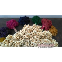Bunga Kering Edelweis Warna Natural (Dried Natural Edelweiss Flower)