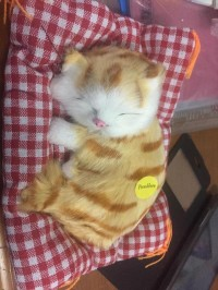 Boneka Kucing 15cm Bisa Bunyi Meong Boneka Valentine Boneka Bare Bears