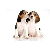 Jual Royal Canin X Small Adult 500Gr Fresh Pack Dog Food / Makanan