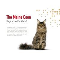 Jual Royal Canin Maine Coon Kitten 400Gr Cat Food / Makanan Kucing