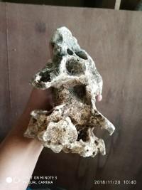 Terhot Batu Garang Eragon Aquascape Batu Bonsai Baik