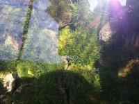 Paling Terlaku Batu Moss Tanaman Air Aquascape Bagus