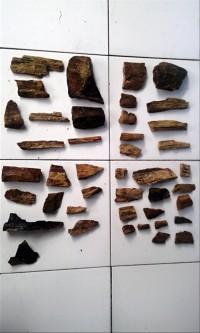 Paling Terlaku Batu Fosil Aquascape Aquarium Terbagus