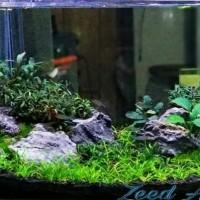 Batu hias aquascape Seiryu stone / hiasan aquarium