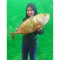 Bantal Ikan Asin 30x70